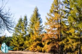 Krajobraz Jura - Agroturystyka Strażnica Łutowiec
